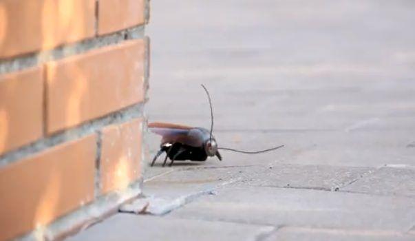 Как управлять тараканами с помощью iPhone? Ваши друзья будут в шоке!