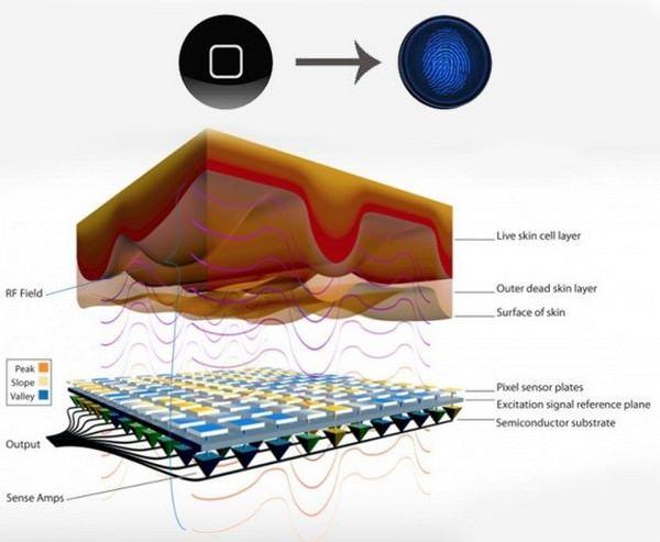 Очередная утечка свидетельствует о наличии дактилоскопического датчика в кнопке Home смартфона iPhone 5S (фото)