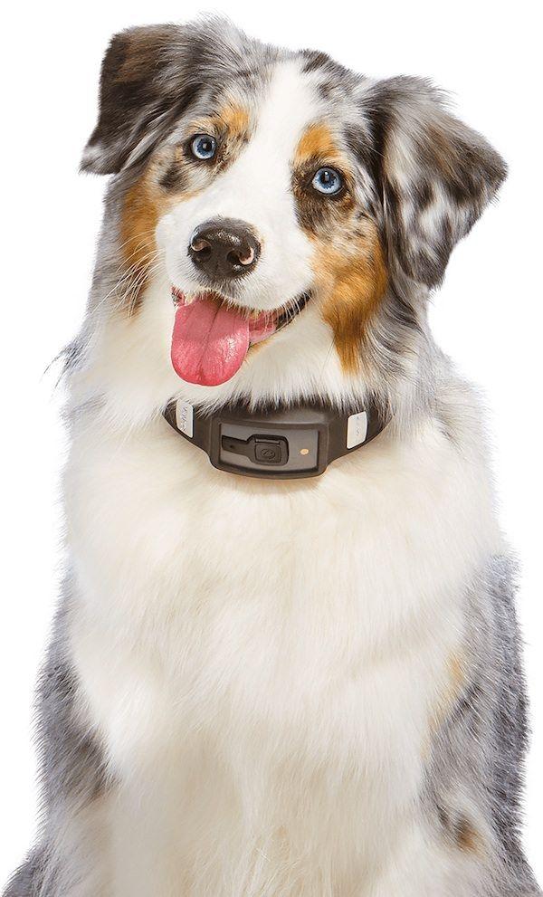 Voyce - умный ошейник для собак iPhone