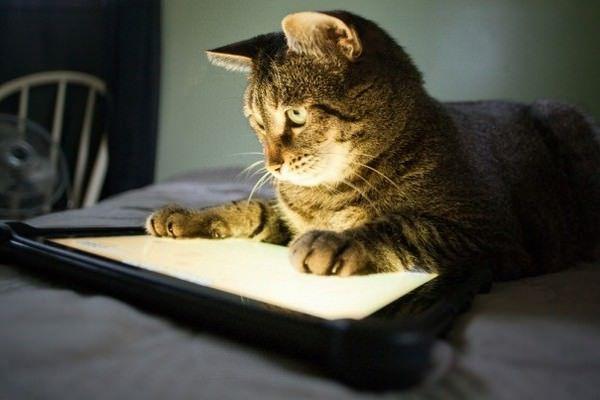 iPad животные