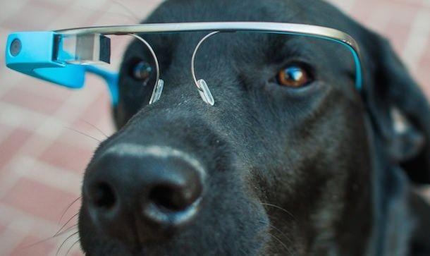 google glass собака