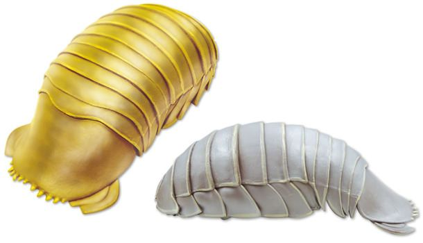 Isopod чехол