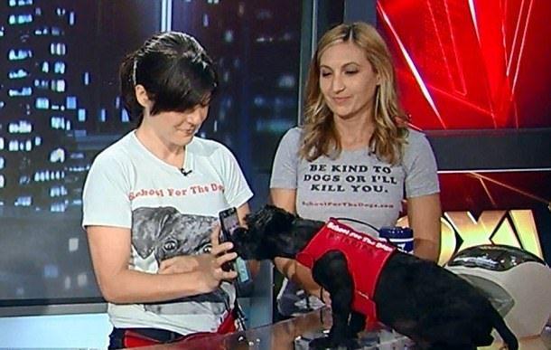 Тренер Анна Джеймс Гроссман учит собак пользоваться iPad