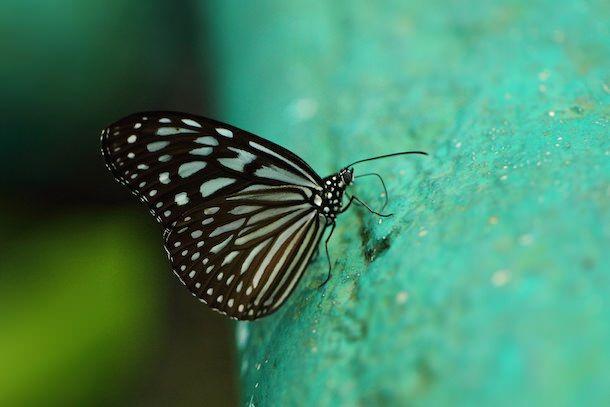 бабочка - обои для рабочего стола