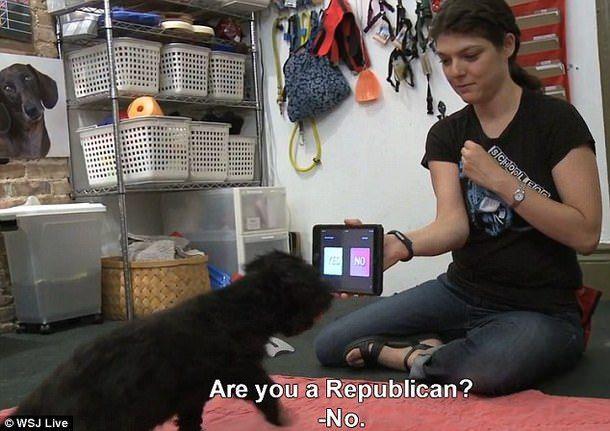 """На вопрос """"Вы республиканец?"""" собака отвечает """"Нет"""""""