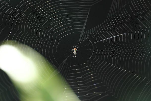 паук - обои для рабочего стола