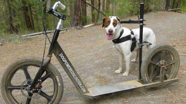 Скутер на собачках