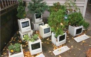 Клумбы из Macintosh