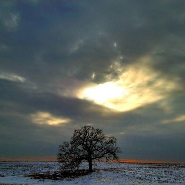«Это Дерево»