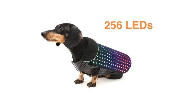 disco-dog-6