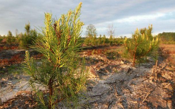 Apple, экология, лес