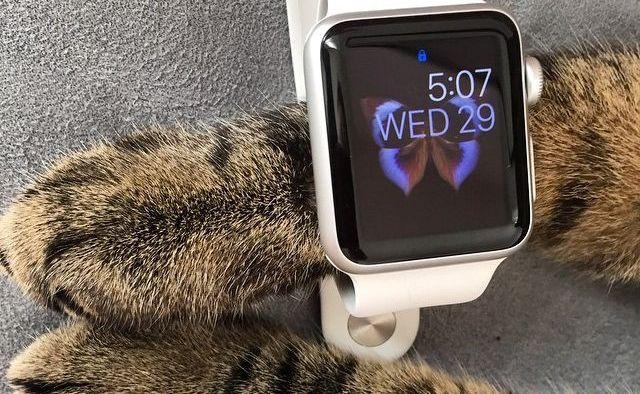 Домашние животные и Apple Watch