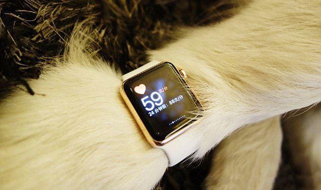 Appe Watch Edition для собаки