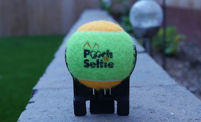 Pooch Selfie, стартап
