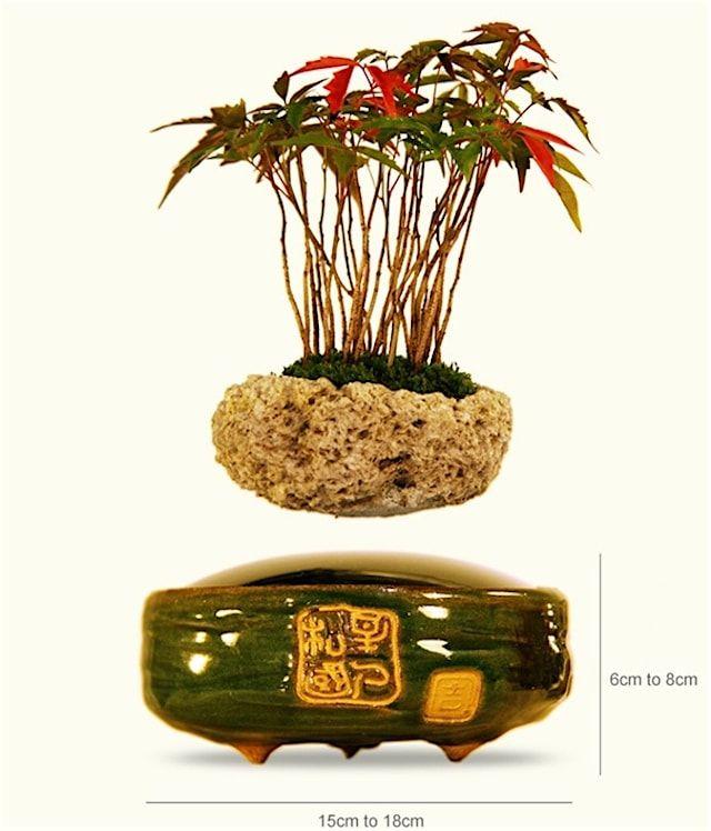 Air Bonsai – декоративное растение, парящее в воздухе