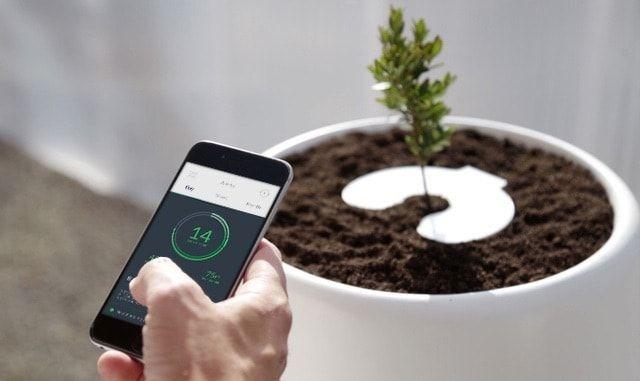 Bios Incube превращает прах умерших в домашние растения