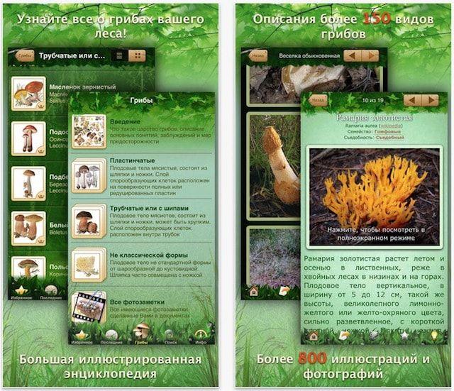 Энциклопедия грибов для iPhone и iPad