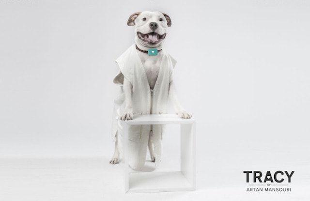 Tracy – трекер, позволяющий следить за здоровьем собак при помощи iPhone