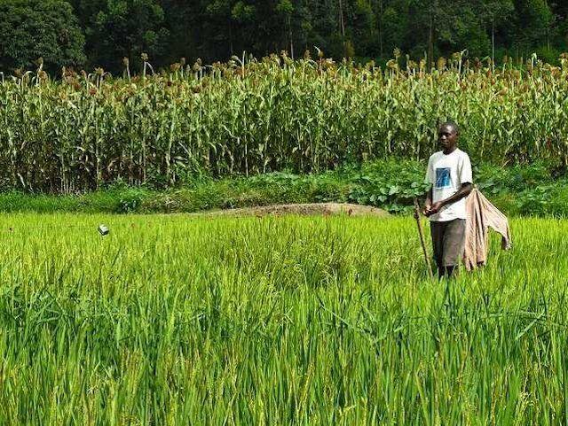 Как жители Конго рискуют жизнью, чтобы обеспечить смартфоны аккумуляторами