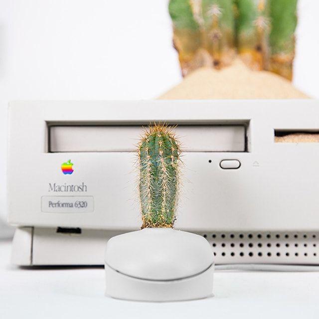 комнатные растения в старые Mac