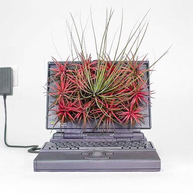 Французский художник сажает комнатные растения в старые Mac
