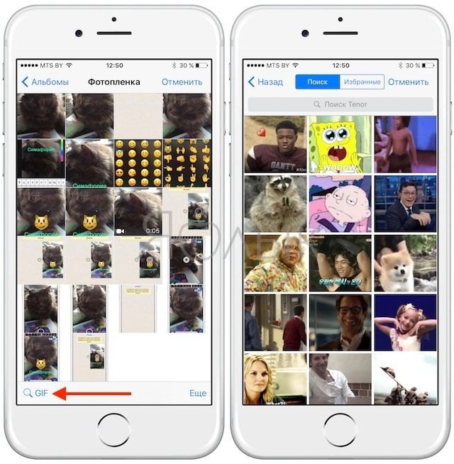 Как в WhatsApp на iPhone создавать и отправлять GIF-картинки (гифки)