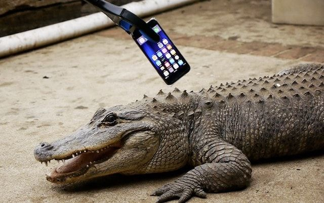 iPhone 7 против крокодила