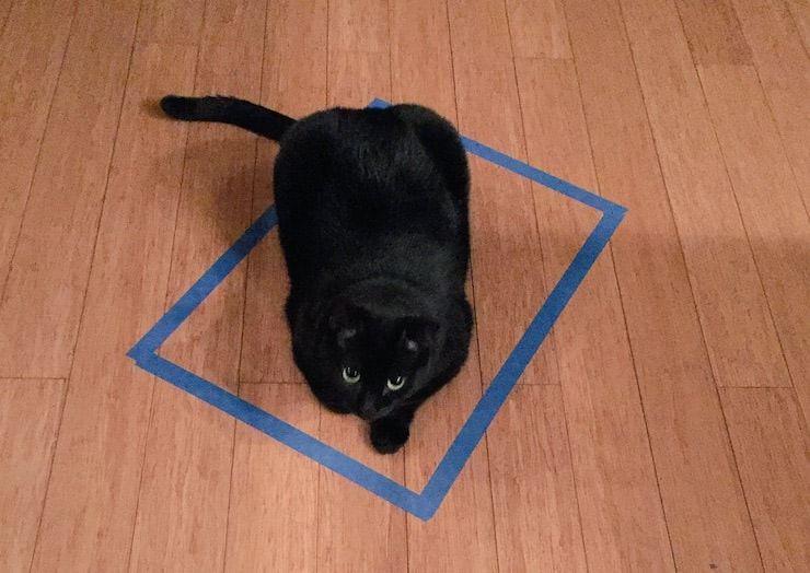 Кошка в квадрате