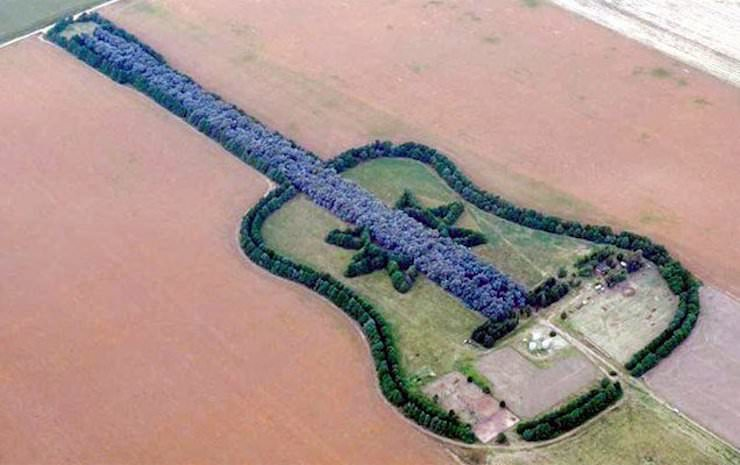 Гитара из леса