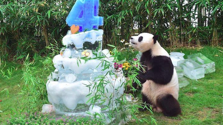 У Samsung есть зоопарк