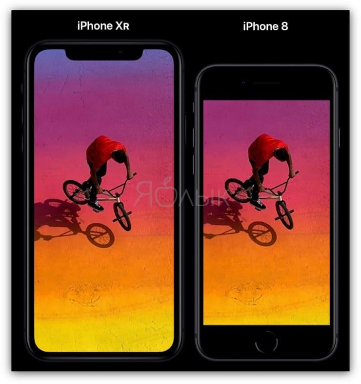 Сравнение размеров iPhone XR и iPhone 8