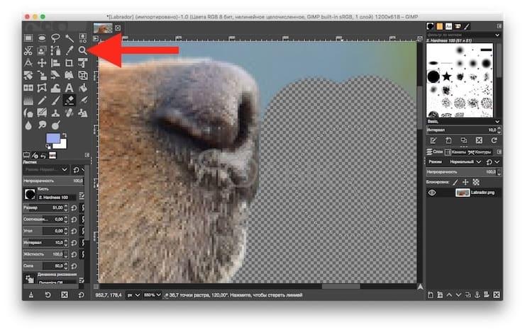 Как быстро удалить фон (сделать его прозрачным) в GIMP