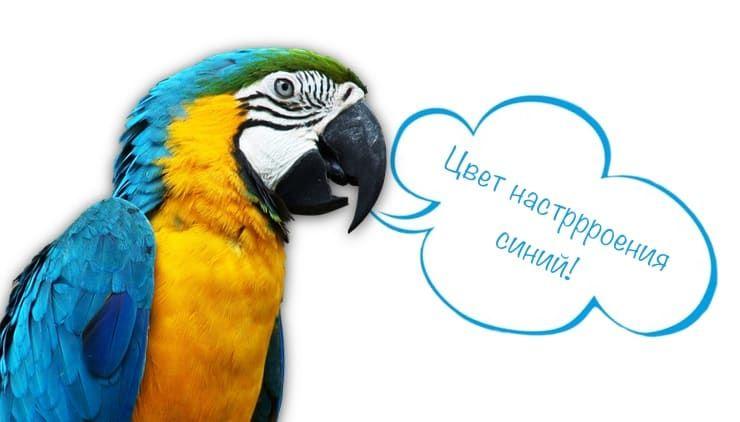 Говорящий попугай: какие птицы говорят и легче всего учатся