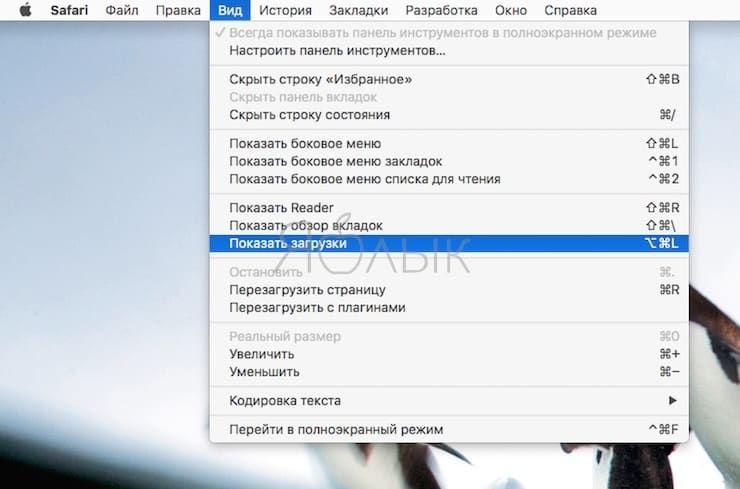 Как просмотреть все загрузки (скачанные файлы) в Safari на Mac