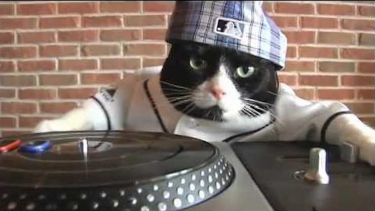 Как наложить автотюн на видео с вашим котом и собакой: новый тренд в соцсетях
