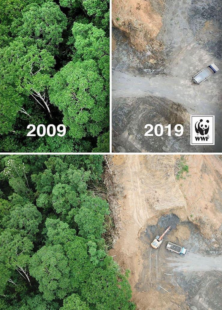 Результаты десятилетней вырубки леса