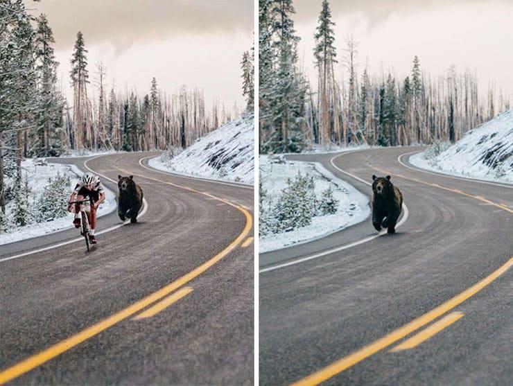 Преследующий велосипедиста медведь