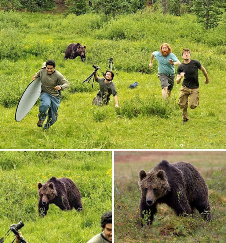 Медведь, преследующий фотографов канала National Geographic