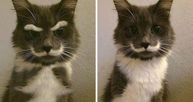 Кот с выразительными усами и бровями