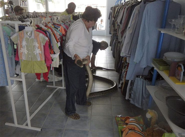 Питон в магазине