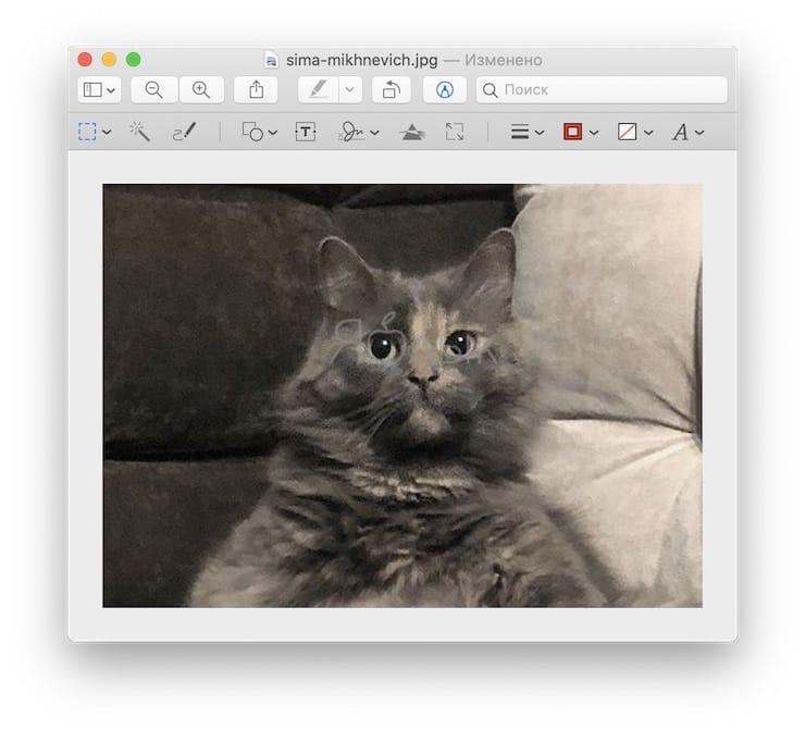 Как быстро обрезать фотографию на Mac (macOS) в программе Просмотр