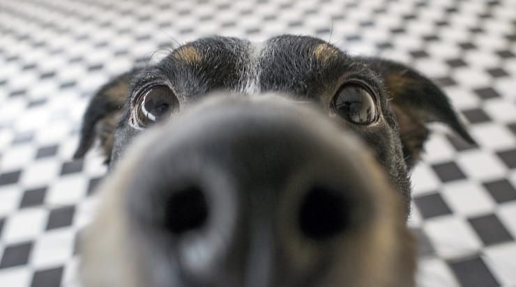 Камеры Ajax распознают животных