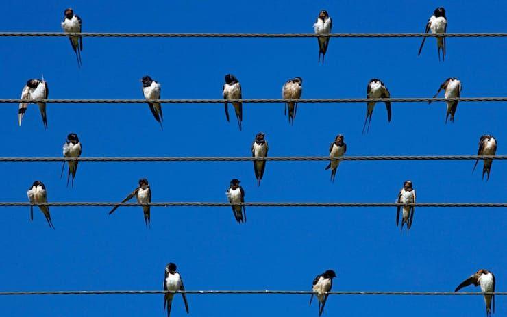 Почему птиц не бьет током на проводах