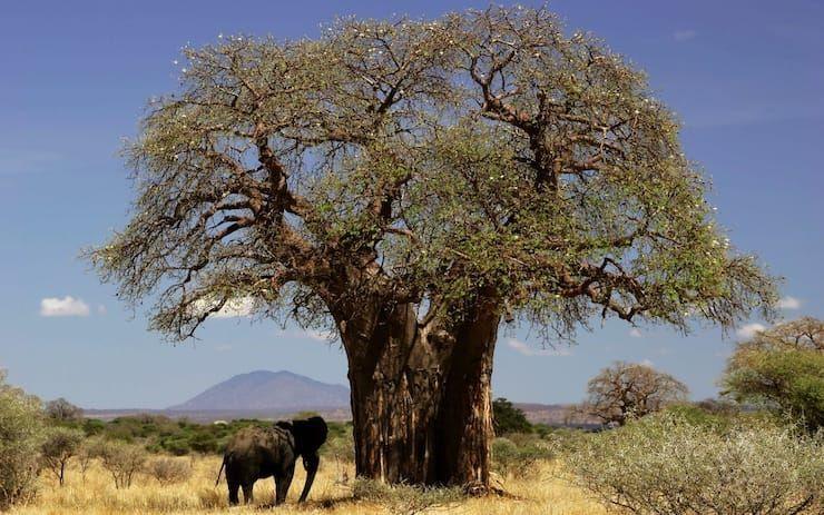 Сколько лет живут деревья