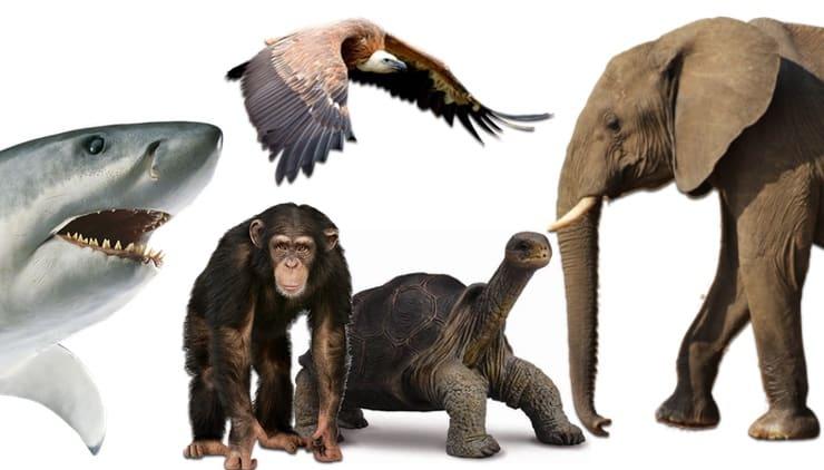 Какие животные и птицы живут дольше всех на планете