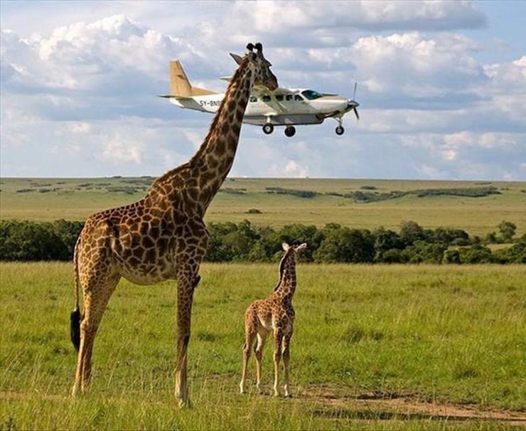 Летная инспекция