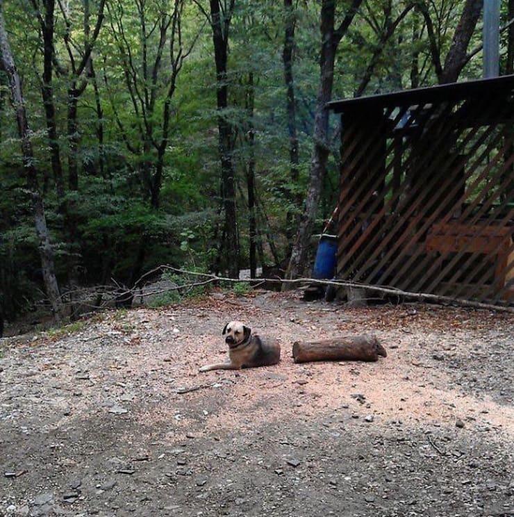 Перерубленная собака