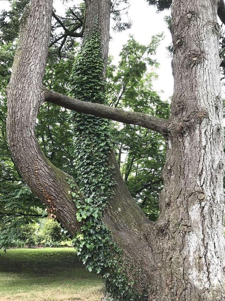 Соединение деревьев