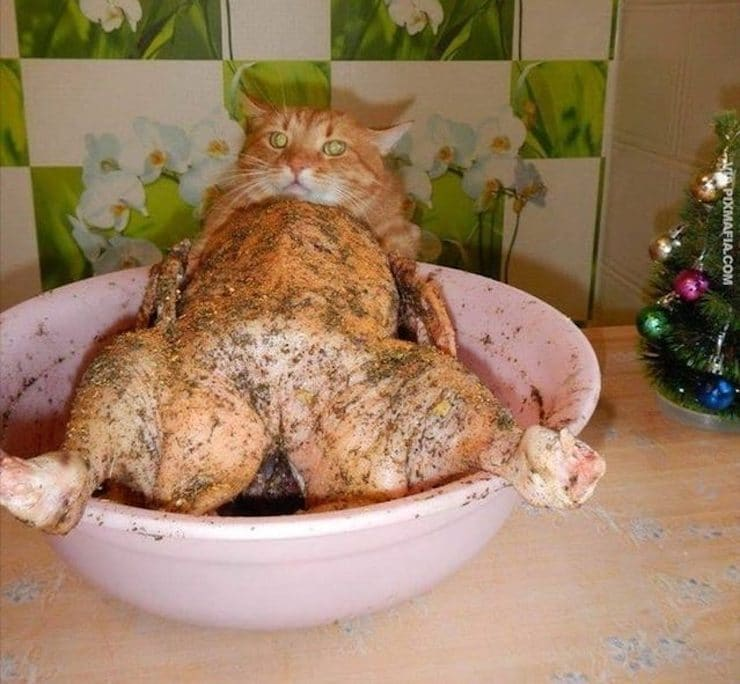 Приготовленный кот